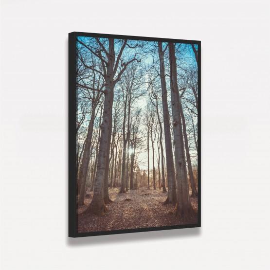 Quadro decorativo Paisagem Floresta de Árvores Altas ao Céu Azul