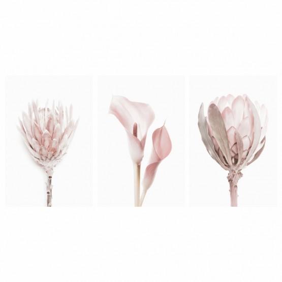 Kit Quadros decorativos Flores Rose - Delicate Set