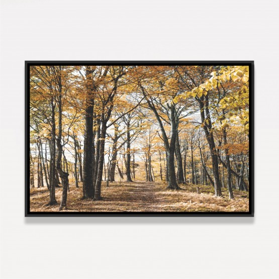 Quadro Árvores Folhas Amarelas Paisagem Floresta Outono