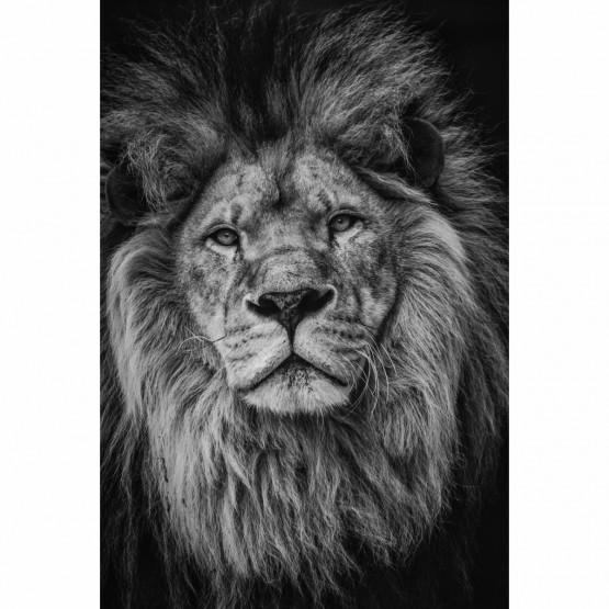 Quadro Leão Decorativo A Elegância do Rei em Preto e Branco
