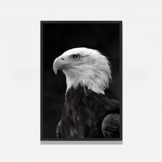 Quadro Águia Cabeça Branca Decorativo Arte em Preto