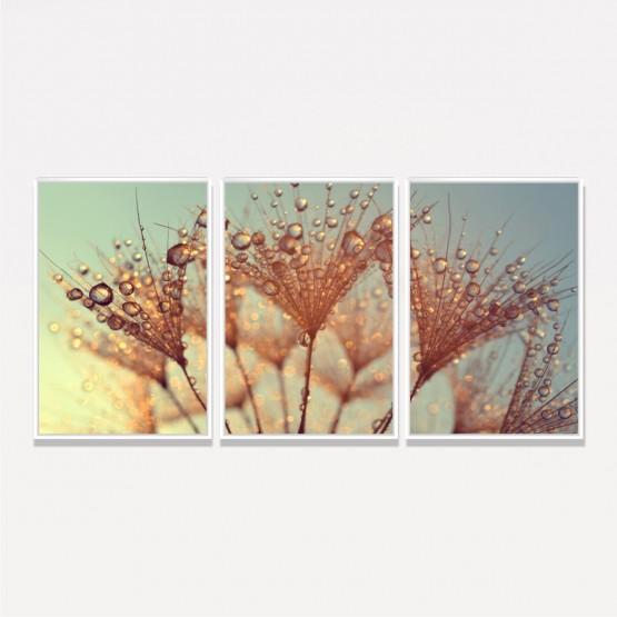Quadro Flor Dente de Leão Gotas de Orvalho decorativo