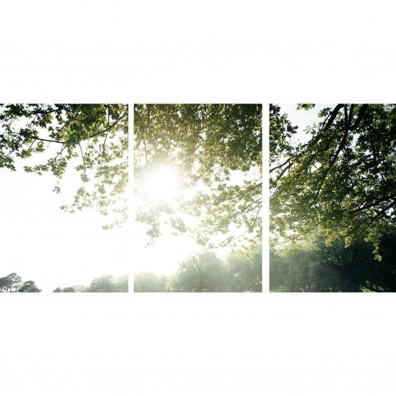 Quadro Paisagem decorativa Sol Entre As Árvores Entardecer