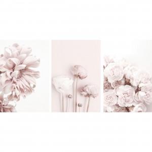 Kit Quadros Flores Peonias Floral decorativo