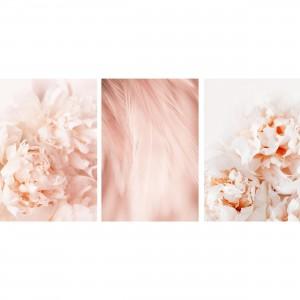 Quadros Flores Peonias Abstrato Kit Rose Floral