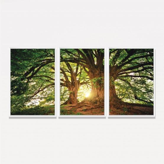 Quadro Árvores Grandes Galhos Paisagem - Tree At Sunset
