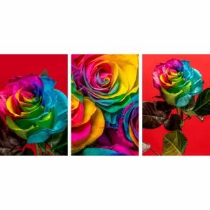 Quadro Trio de Rosas Coloridas Arco Iris