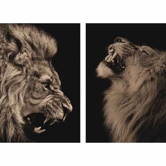 Quadro Leão Duo em Sépia decorativo