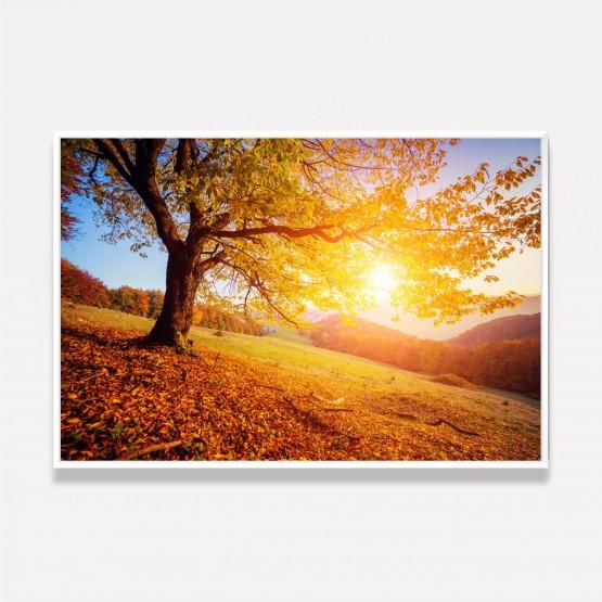 Quadro Árvore Folhas Amarelas - Autumn Landscape