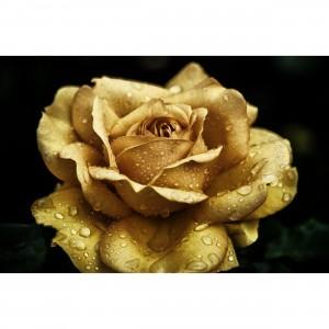 Quadro Flor de Rosa Amarela Detail