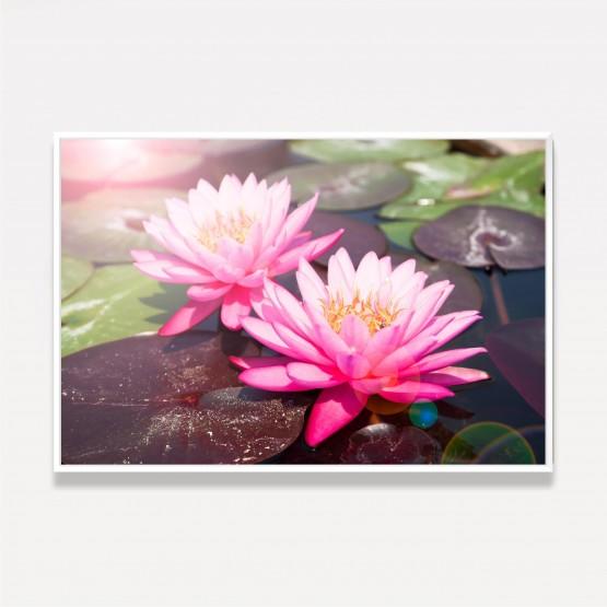 Quadro Decorativo Flor de Lotus Rosa Sobre a Água