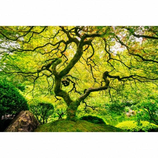 Quadro Árvore de Bordo Verde - Paisagem Jardim Natural