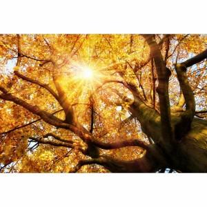 Quadro Árvore Grande Paisagem Brilhando ao Sol de Outono