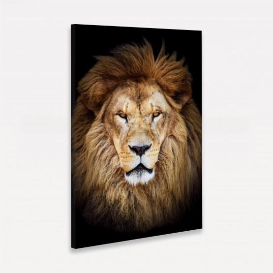 Quadro Leão Africano - Wild Lion