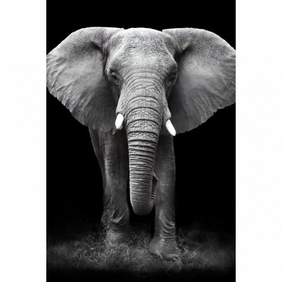 Quadro Elefante em Arte Preto e Branco
