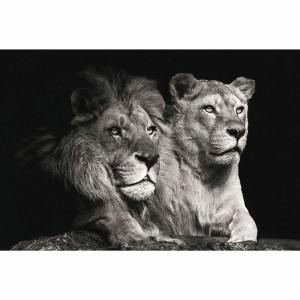 Quadro Leão Casal em Preto e Branco decorativo