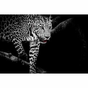 Quadro Leopardo Africano em Arte Preto e Branco