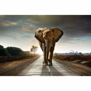 Quadro Elefante Caminhando em Arte
