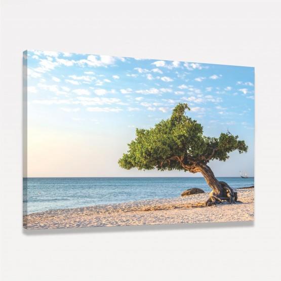 Quadro Árvore Divi Divi Paisagem Praia Mar