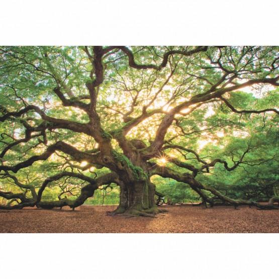 Quadro Árvore Natureza Enorme - Carvalho Antigo