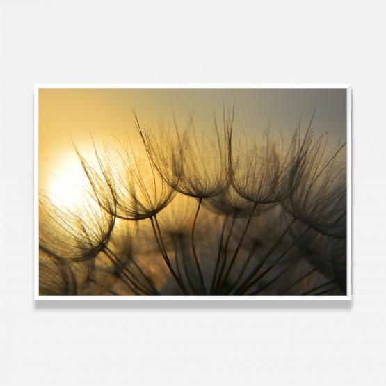 Quadro Flor Dente de Leão ao Por do Sol - Dandelion