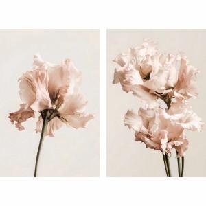 Quadro Flores Plantas Duo Gentiana Rosa decorativo - 2 Peças