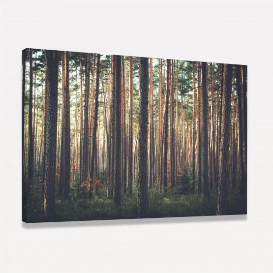Quadro Floresta de Arvores Altas