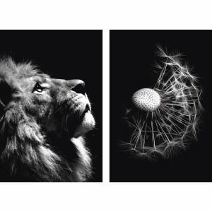 Quadro Leão e Flor P&B - Lion With Dandelion Flower