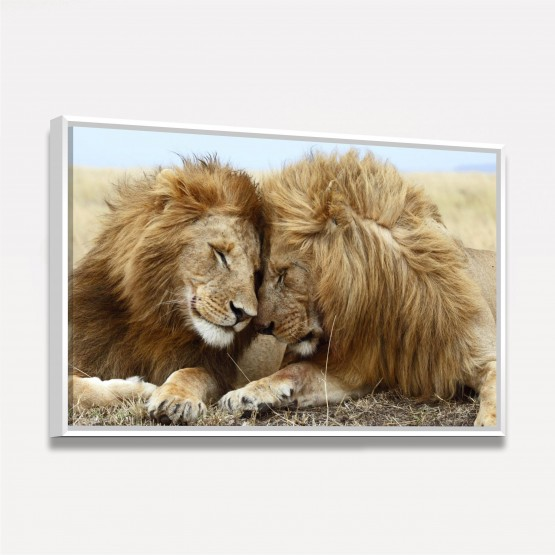 Quadro Decorativo Leões Felizes África