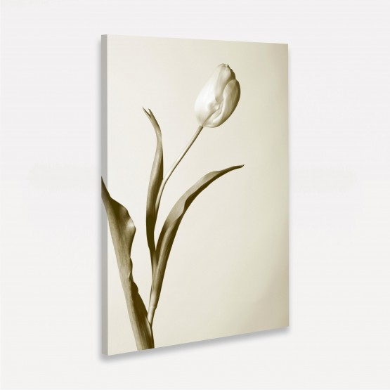 Quadro Artístico Flor Tulipa Branca