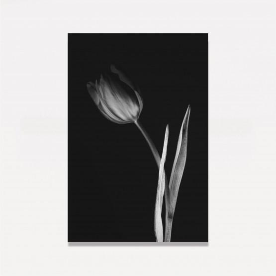 Quadro Decorativo Lady Tulipa Preto e Branco