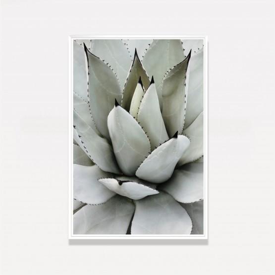 Quadro Decorativo Babosa Tropical