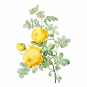 Quadro Flor Rosa Amarela Artístico