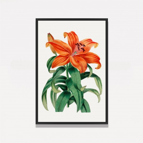 Quadro decorativo Flor de Lírio Vintage Artístico