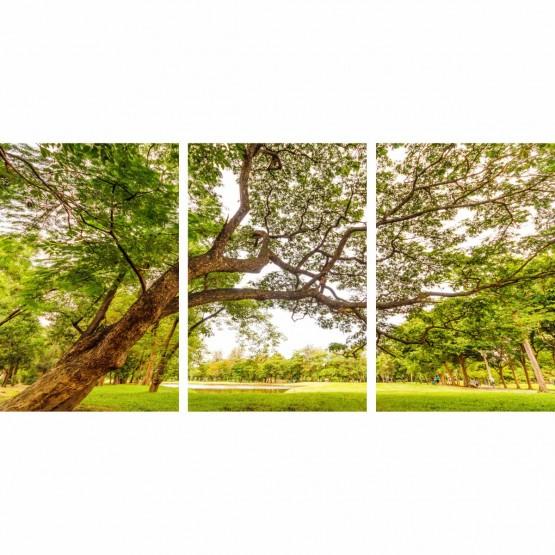 Quadro Arvore com Grandes Galhos Emoldura o Parque