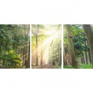 Quadro Árvores Paisagem Natureza - Sun And Trees