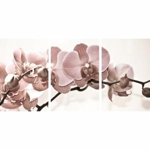 Quadro Flores Orquídeas Bege e Rose decorativo